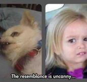Extraordinary Resemblance
