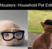 Household Pet Edition