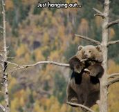 Oh Nothing, Just Hanging