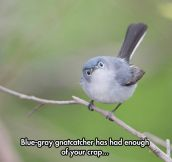 If Stewie Griffin Was A Bird