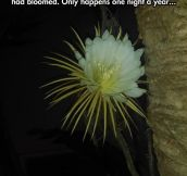 It Blooms Once A Year