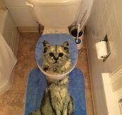 Bathroom Cat Set