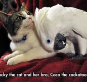 These Pets Are Best Bros
