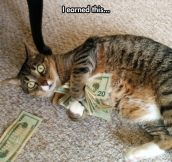 The Real Business Cat