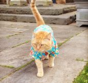 Just A Cat In A Hawaiian Shirt