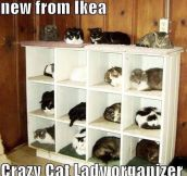 Crazy Cat Ladies Rejoice