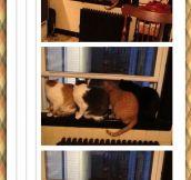 A Capella Cats