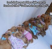 A Doggy Kindergarten