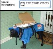 The Cutest Delivery Boy