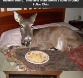 Dillie The Blind Spaghetti Loving White Tail Deer