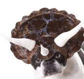 Dogsaur
