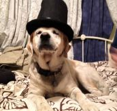 Fancy Dog With A Top Hat