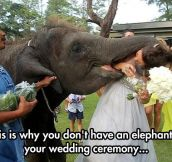 He Just Wants To Kiss The Bride