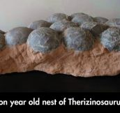 Fossil Nest