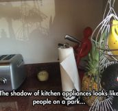 Kitchen Appliances' Intriguing Shadow