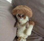 A Kitten In A Crocheted Mushroom Costume