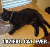 Lazy Feline