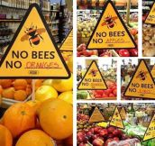 If Bees Go Extinct