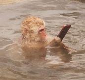 Monkey Takes A Selfie