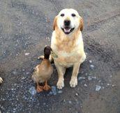 Very Unconventional Friendship