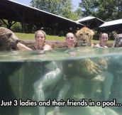 Going For A Swim With Good Friends