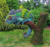 Chameleon topiary.