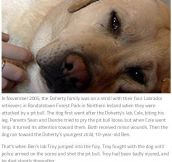 These 10 Dogs Are Heroes (10 pics)