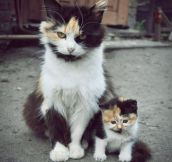 10 Animals With Their Parents, Now You Can Melt In Peace