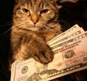 Gangsta Cats…(18 Pics)