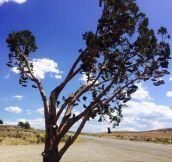 The Shoe Tree