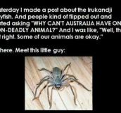 Australia Has A Friendly Spider