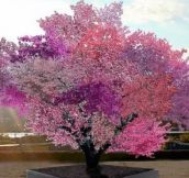 This Tree Can Produce 40 Different Kinds Of Fruits (20 Pics)