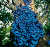 Butterflies In The Amazon