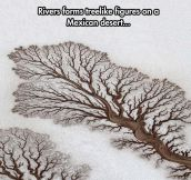 Fractals Commonly Found In Nature