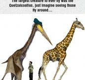 The Largest Flying Creature