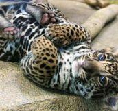 A Baby Cheetah