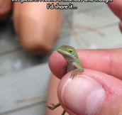 Unimpressed Lizard Doesn't Really Care