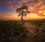"""Gator Bait"" North Florida Lake photographed by Jesse L. Summers"
