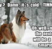 Lassie You've Failed One More Time