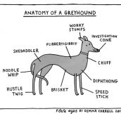 Greyhound Anatomy