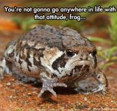 Grumpy Toad Has Had Enough