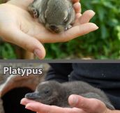 Any Baby Animal Is Cute