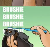 Brushing A Bat
