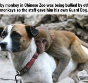 Baby Monkey's Protector