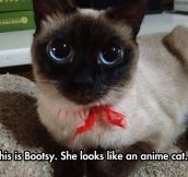 Anime Cat In Real Life