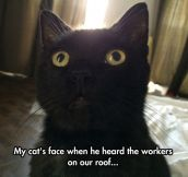 Astonished Cat