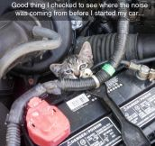 Get Outta There Cat, You Aren't Even A Mechanic