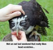 This Makes Me Want An Owl For A Pet