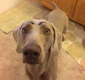 He Looks So Surprised