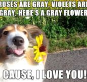 When Dogs Write Poems